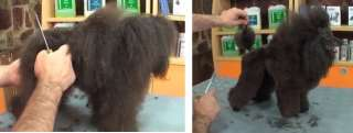 NEW DVD 2012 course DOG GROOMING Poodle Toy Puppy Trim FABULOUS see