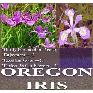 IRIS Flower Seeds Iris tenax Color Purple & White Perennial Patio
