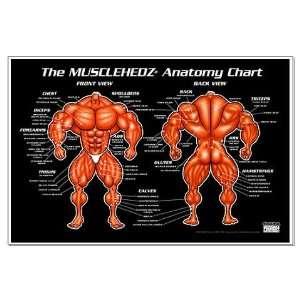 MUSCLEHEDZ Anatomy Chart   Anatomy chart Large Poster by