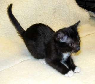 Artisan Glass & Tigers Eye Cat Charm Bracelet CAT RESCUE