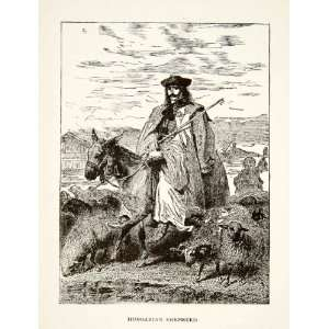 1901 Wood Engraving Hungarian Shepherd Donkey Sheep Ram