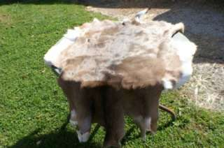 Whitetail deer hide hair on super soft leather tan buck