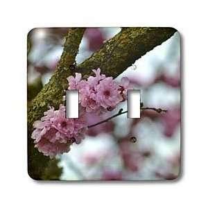 com Patricia Sanders Flowers   Beauty of Spring  Pink Flowering Tree