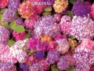 Hydrangeas Cross Stitch Pattern Flowers Gardens