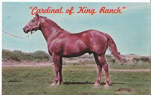 QUARTER HORSE POSTCARD HIRED HANDS CARDINAL KING RANCH