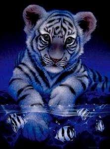 MIDNIGHT BLUE TIGER CUB CROSS STITCH CHART, BN (T010)