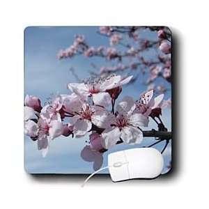 Patricia Sanders Flowers   Zen Cherry Blossom Branch Flowers